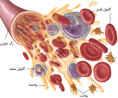 گلبول های سفید در خون برای تقویت سیستم ایمنی بدن